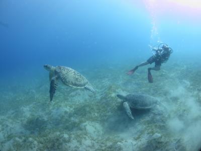 海龟,海,深度,潜水员