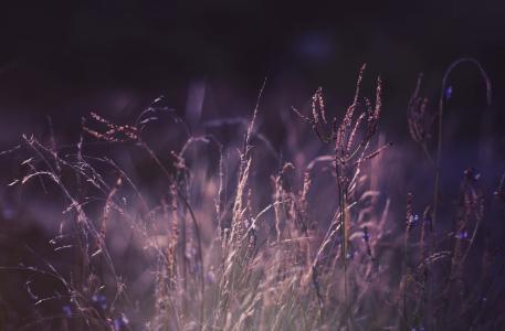 植物,自然,草,光