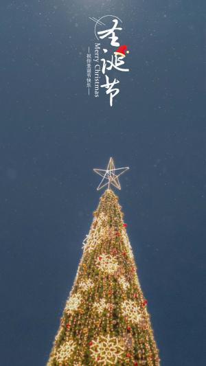 圣诞节夜晚下的圣诞树