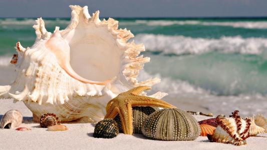 海,贝壳,沙子