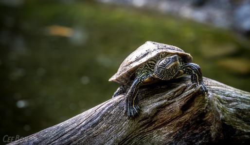 龟,壳,日志