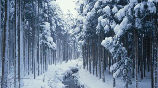 森林,冬天,雪,流,树,性质