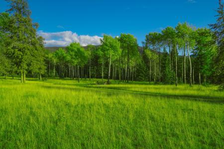 蓝天下的绿地