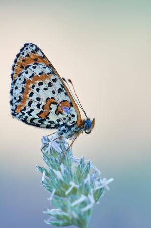 矗立在花朵上的蝴蝶