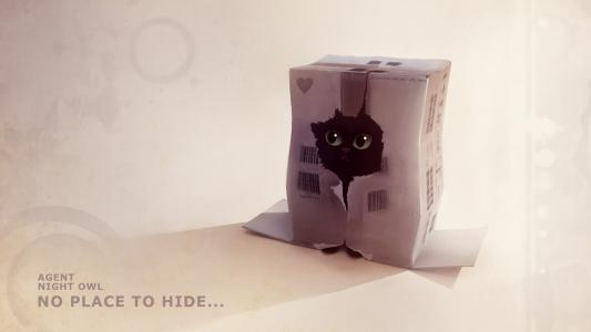 小猫,盒子,洞,皮革,文本