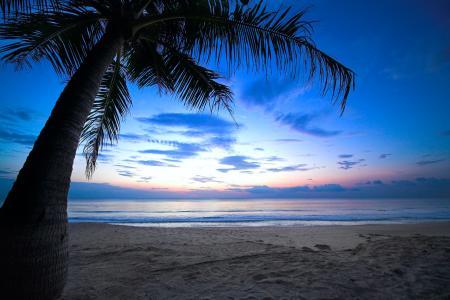 多云的天空,垂枝棕榈树,热带日落,加勒比海,海洋
