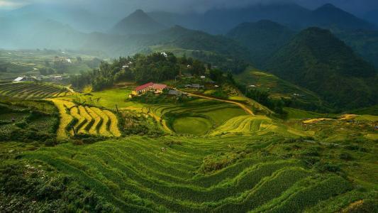 梯田,在越南,壁纸