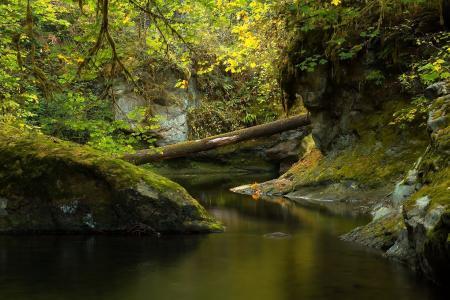 河,岩石,树木,性质