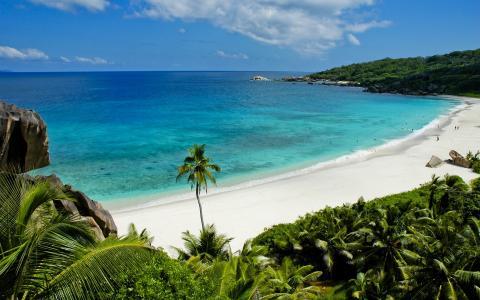海,棕榈树,沙子,森林
