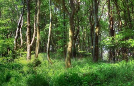 森林,树木,景观