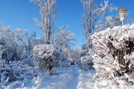 冬天,雪,灌木,路径