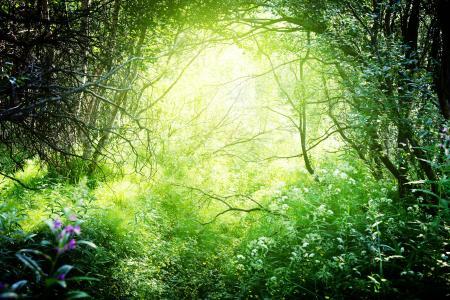 森林,性质,草,树,分支机构