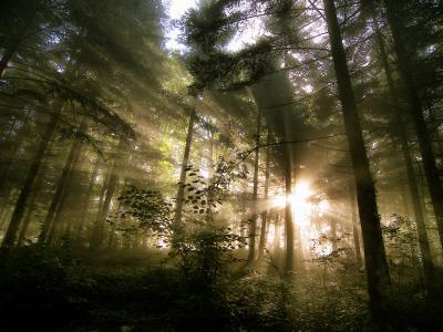 早上,阳光,树木,大自然