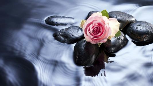 爱,玫瑰,壁纸