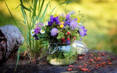花束,田地,鲜花,矢车菊,洋甘菊,毛茛