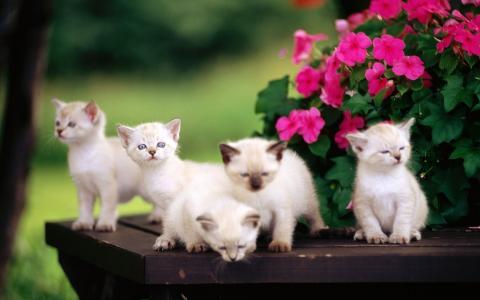 毛茸茸的小猫,惊喜,鲜花