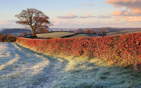 深秋,树,田野,大自然,草坪,篱笆,白霜