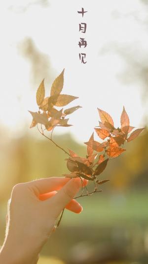 十月再见唯美枫叶