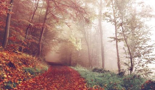 秋季森林唯美意境