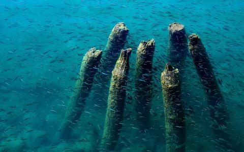 码头,蓝色,木材,湖泊,鱼,奥赫里德,水,仍然存在