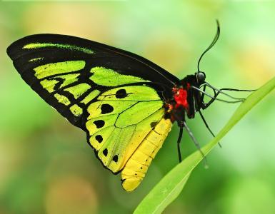 叶,草叶,蝴蝶,背景,米..,。
