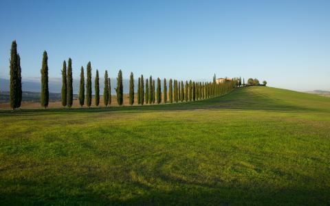 景观,田野,草地,草,树,房子,性质