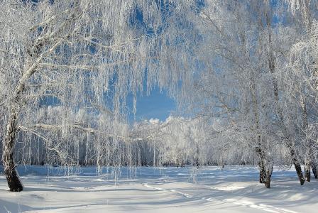 树木,雪,白霜