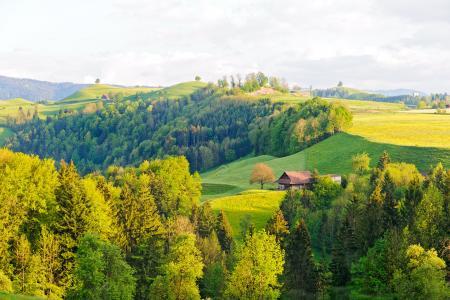 Tessin,Tessin,瑞士,丘陵,树木,房屋,景观
