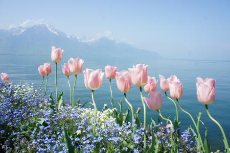 春天,花朵,温柔,山,水