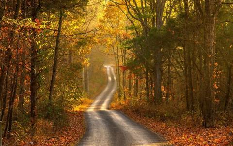 景观,道路,秋季