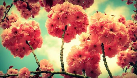分支,鲜花,植物区系