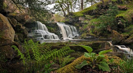 瀑布,植物,石头,景观