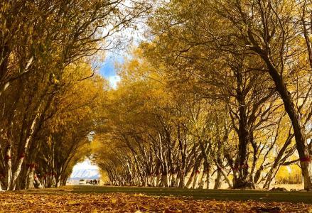秋日小路林间风光