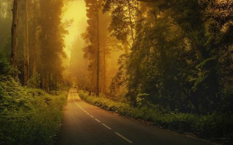 汽车,标记,树木,森林,道路