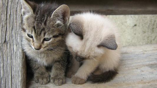 小,猫,壁纸