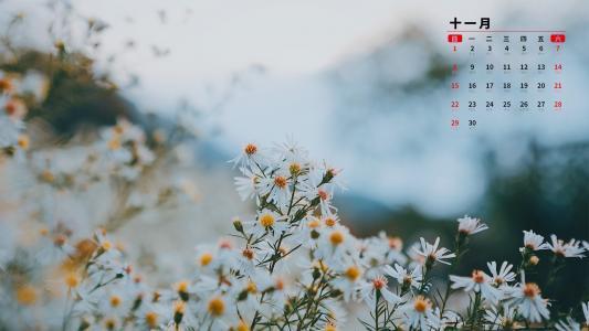 2020年11月小清新雏菊日历