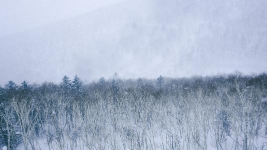 唯美迷人的森林雪景