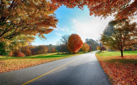秋天,公园,落叶