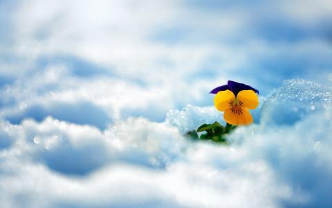 花,雪,冬天