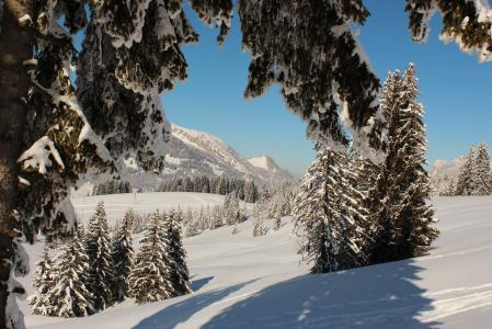 冬天,瑞士,卢塞恩,雪,树,云杉