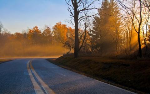 景观,秋季,早上,路