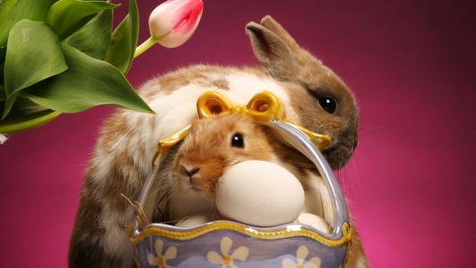 兔子,壁纸