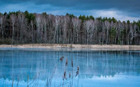秋天,树木,湖泊,森林,寒冷