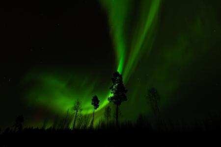 芬兰,芬兰,Jyvaskyla,Jyvaskylan,北极光,北极光,树木,夜,夜,天空,冬天