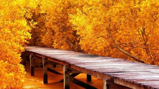 黄色,树木,壁纸