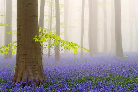 景观,性质,森林,树木,花朵,春天,雾,美女