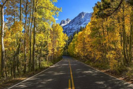 景观,性质,秋季,道路,树木,山