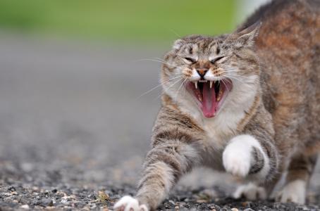 一只猫,一只猫,一只猫,一只肚子,一只哈欠
