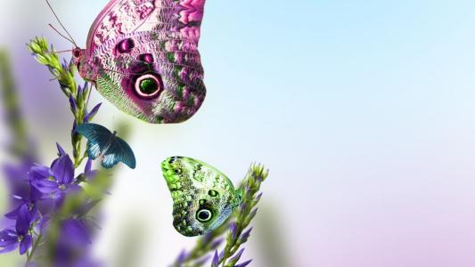 蝴蝶,上,鲜花,壁纸