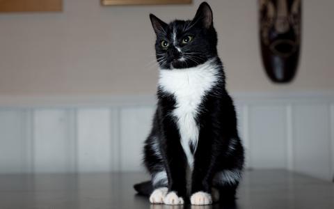 发现猫,柔软的羊毛